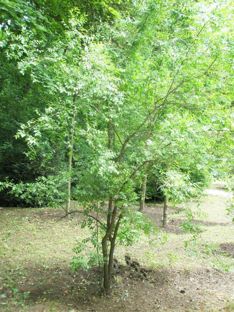 Классификация деревьев